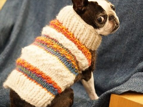 My Dog Too Small for a Dog Sweater - Post Thumbnail